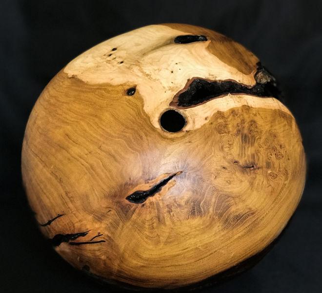 forme-creuse-arbre-judee-1