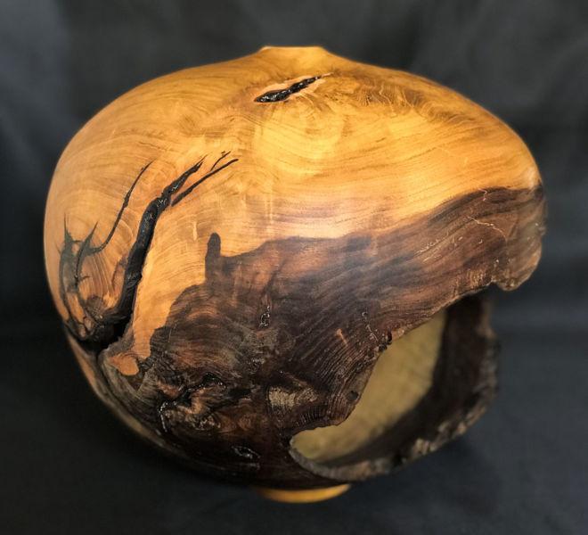 forme-creuse-arbre-judee-4